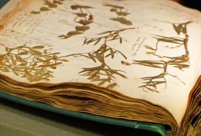 2_20nhm20existing20herbarium20collection20-2030020years20old